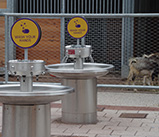 Fountains-and-goats